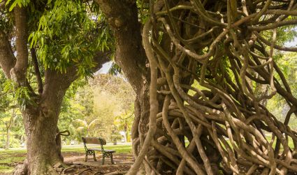 Unter den gewundenen Ästen der Bäume lässt es sich herrlich entspannen
